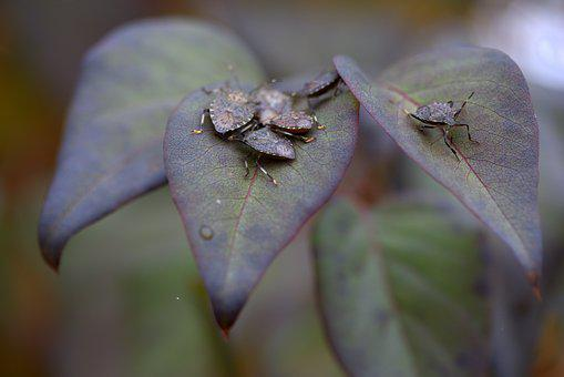 Insects, Leaves, Multiplication, Family, Nature, Bug