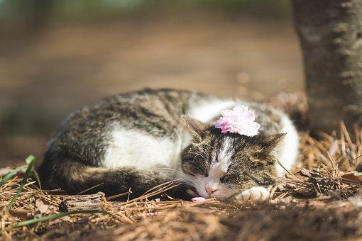 Cat, Flowers Just, Animal, Break