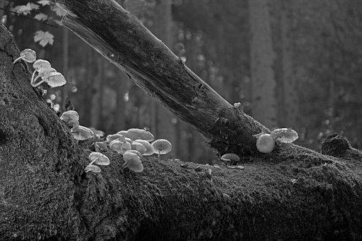 Mushrooms, Book Mucus Rüblinge, Forest, Tree Fungi