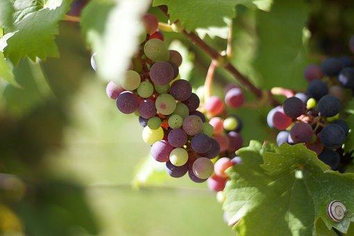 Grape, Wine, Hungary