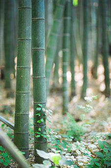 Bamboo, Landscape, Tabitha, Background, Abstract