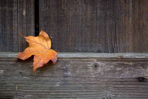 Leaf, Coloring, Autumn, Dry, Oak