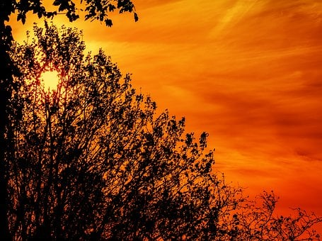 Sunrise, Silhouette, Backlighting, Clouds, Bush, Leaves