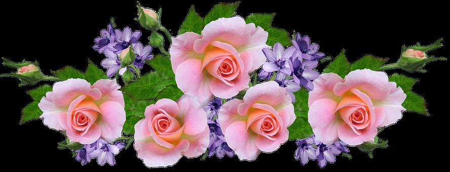 Roses, Pink, Arrangement, Mauve Flowers, Garden, Nature