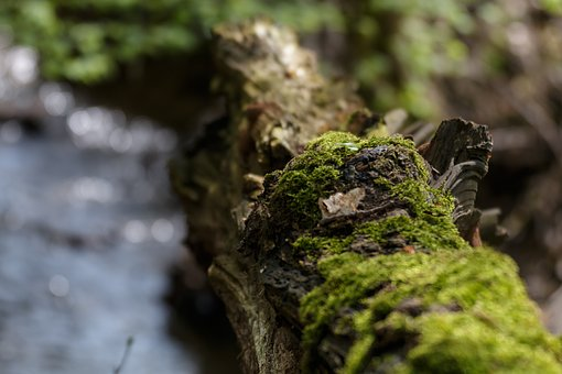 Branch, Moss, Nature, Forest, Tree, Green, Wood