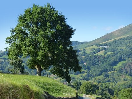 Tree, Big Tree, Prado, Pyrenees, Navarre, Mound
