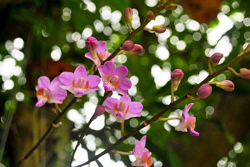 Flower, Orchids, Lan Diep, Scallops, Message Mountain