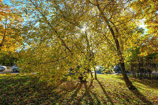 Autumn, Park, Killarney, Nature, Leaves, Season