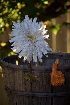 Flower, Daisy, Petals, Squash, Orange, Bumpy, Basket