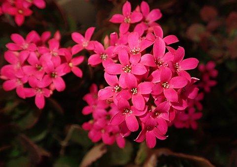Flower, Succulent, Plant, Garden, Nature