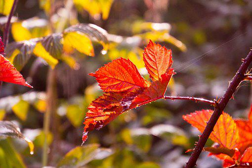 Backlighting, Autumn, Nature, Leaves, Bright, Sun
