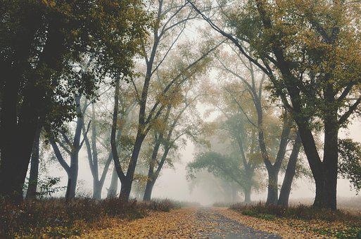 Fog, Autumn, Trees, Arch, Road, Yellow, Leaves, Mystic