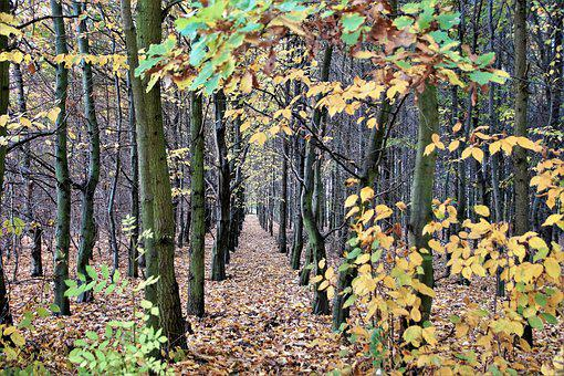 Autumn, Forest, Deciduous, Trees, Colored, October