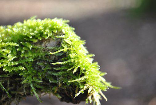 Moss, Wild Growth, Tribe, Forest