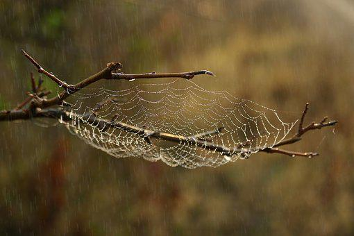 Spider Web, Rain, Drops, Water, Wet, Spider
