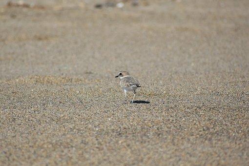 Animal, Sea, Beach, Bird, Wild Birds, The Department Of