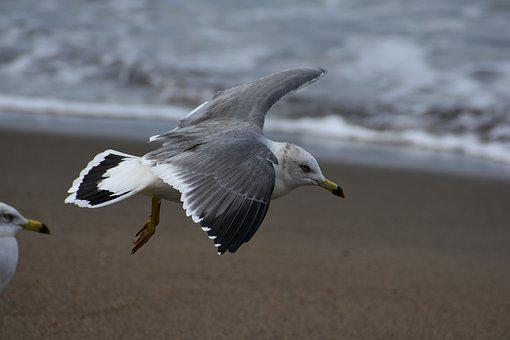 Animal, Sea, Beach, Wave, Bird, Wild Birds, Seabird