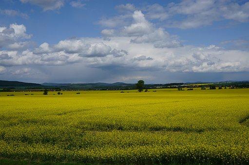 Landscape, Rape, Sky, Yellow, Field, Agriculture