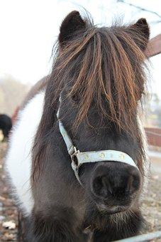 Horse, Pony, Animals
