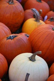 Pumpkins, Fall, Pumpkin, Autumn, Halloween, Orange