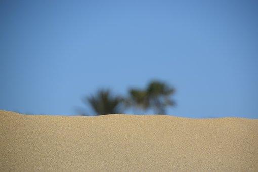 Desert, Beach, Palm, Gran Canaria, Sand, Palm Trees