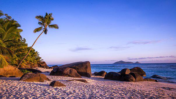 Beach, Palm Trees, Island
