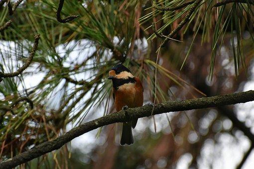 Animal, Forest, Bird, Wild Birds, Tits Department