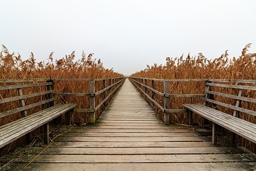 Spring Lake, Web, Boardwalk, Mood, Landscape, Railing