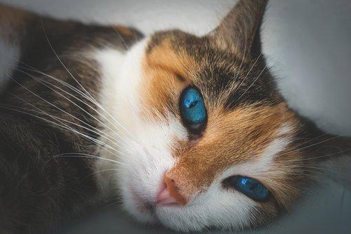 Cat, Animal Portrait, Domestic Cat, Lucky Cat, Concerns