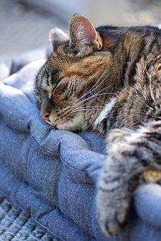 Cat, Mackerel, Pet, Animal, Domestic Cat, Fur, View