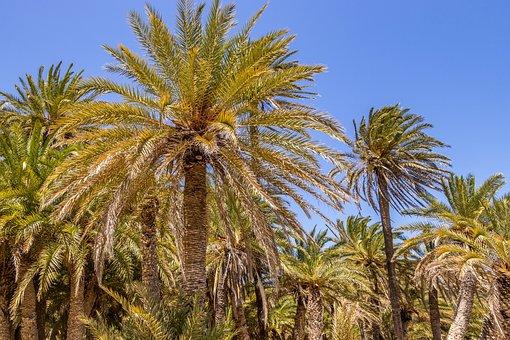 Palm Trees, Greece, Crete, Holidays, Summer, Tropical