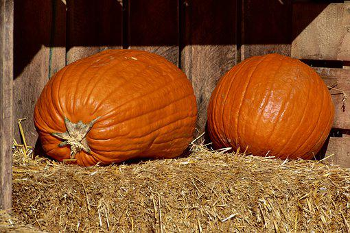 Pumpkins, Orange, Hay, Halloween, Harvest, Decoration