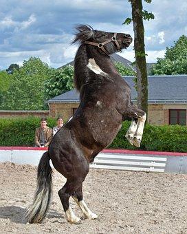 Pony, Standing, Drawn Up, Equine, Horse, Dwarf, Animal