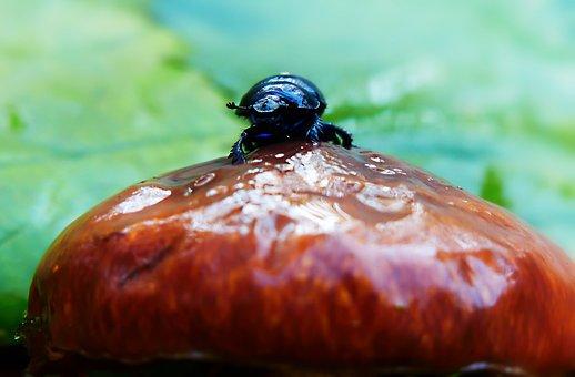Forest Beetle, Insect, Mushroom, Maslak, Autumn