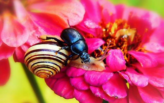 Forest Beetle, The Beetles, Wstężyk Huntsman, Molluscs
