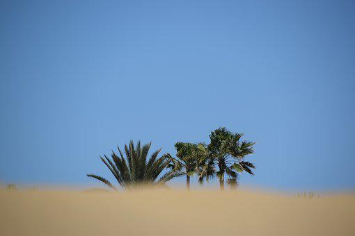 Desert, Palm, Beach, Gran Canaria, Palm Trees, Sand
