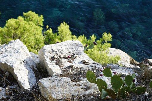 Coast, Stones, Rocks, Cactus, Greenery, Croatia