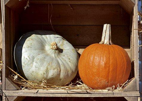 Squash, Pumpkin, Hay, Halloween, Harvest, Decoration