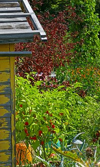 Garden, Garden Shed, Hedges, Shrubs, Watering Can, Wood