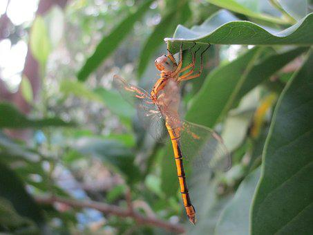 Damselflies, Insect, Nature