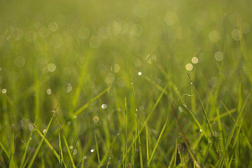 Bokeh, Greenspace, Grass, Backyard, Yard, Lawn