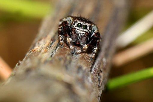 Spider, Insect, Macro, Bug, Arachnid, Branch