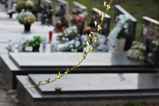 Ivy Branch, Graves, City Cemetery Zagreb, Miroševac