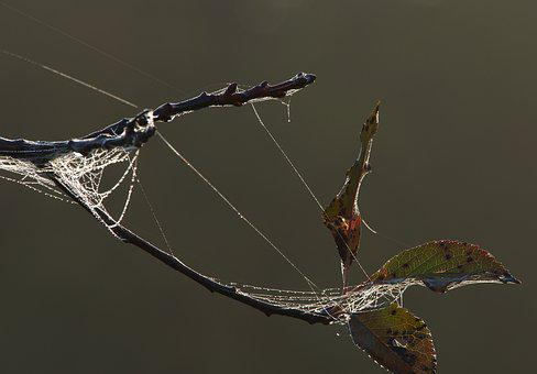 Spider Web, Morgentau, Drop Of Water, Fog, Backlighting