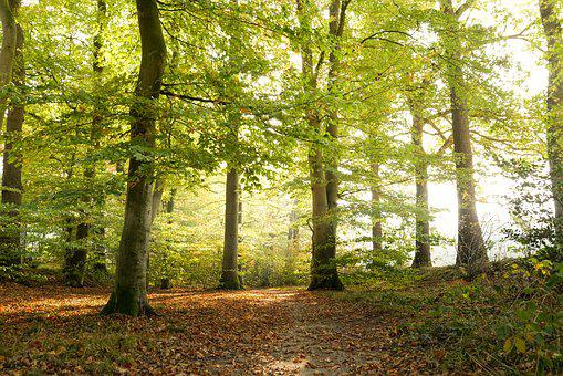 Green, Forest, Autumn, Landscape, Trees, Nature
