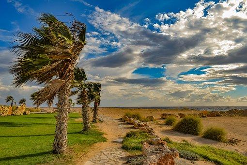 Palm Trees, Wind, Path, Landscape, Nature, Windy, Sky