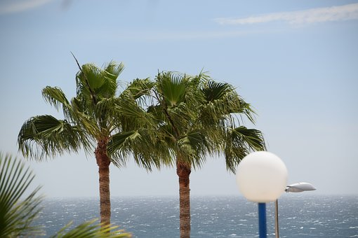 Palm Trees, Spain, Gran Canaria, Sea, Ocean, Tropical