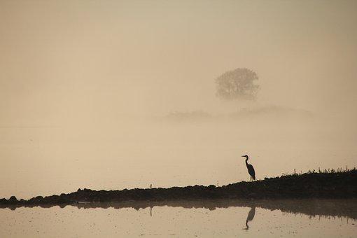 Heron, Oderbruch, Bird, Morgenstimmung