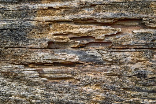 Wood, Texture, Old, Rustic