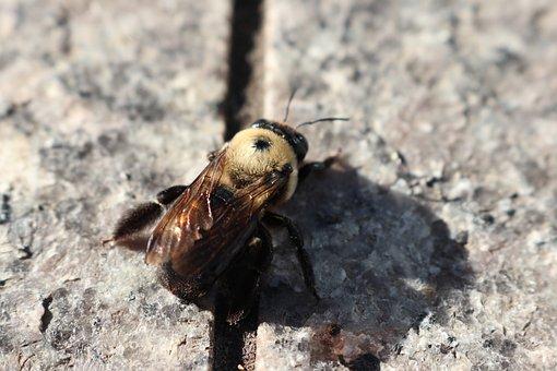 Bee, Fall, S, Flower, Plant, Bloom, Summer, Goldenrod